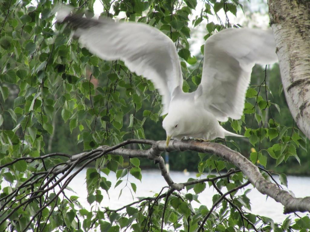 4-finland-bird-1024x768