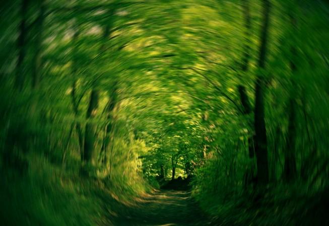 Durch Ziehen des Objektivs zur Seite während der Belichtung entsteht ein Eindruck von Bewegung. Foto: Rastislav P.