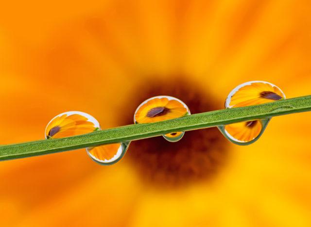 Auf der Aufnahme ist im Vordergrund ein Blatt mit Wassertropfen zu sehen und im Hintergrund eine Ringelblume.