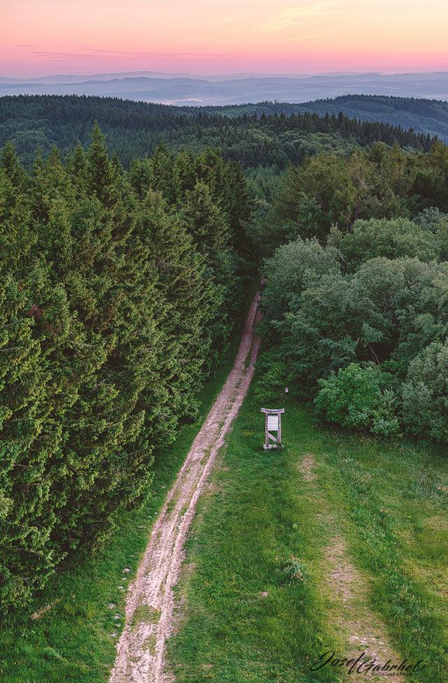 Der Weg bildet die Hauptlinie, die den Betrachter durch den Wald bis hin zum Sonnenaufgang führt.