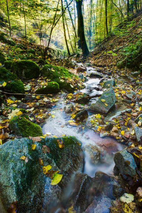 Fluss im Wald.