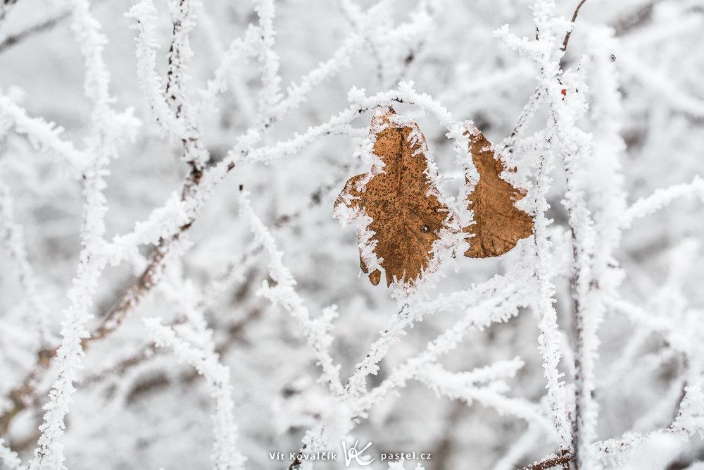 Blätter auf einem Baum mit Raufrost im Januar.