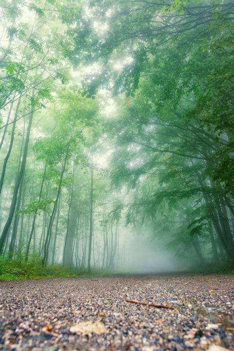 Wie fotografiert und bearbeitet man Landschafsaufnahmen mit Nebel: Nebliger Waldweg.