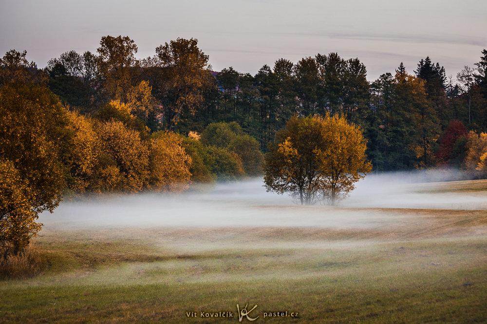 Wie man bei Nebel fotografiert: Auf diese Wiese bin ich zufällig auf meinem Heimweg gestoßen.