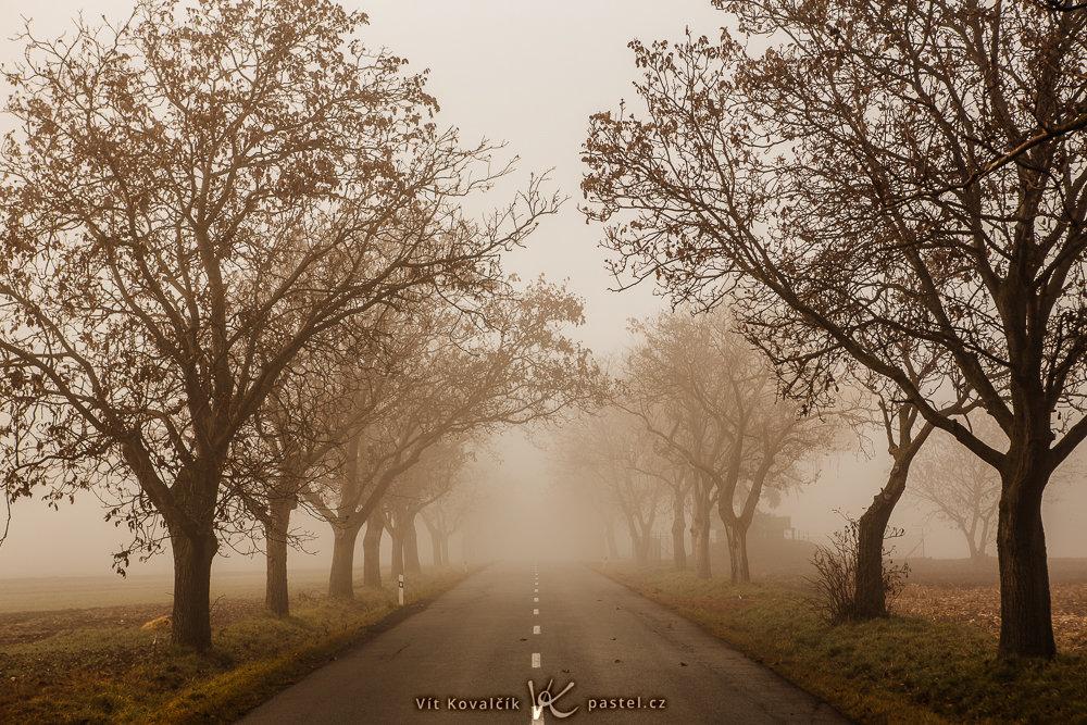 Wie man bei Nebel fotografiert: Die Bäume verschwinden optisch in der Ferne.