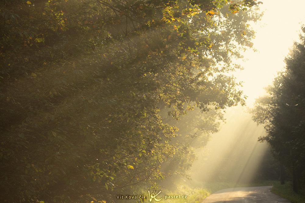 Wie man bei Nebel fotografiert: Sonnenstrahlen am frühen Morgen bei Nebel.