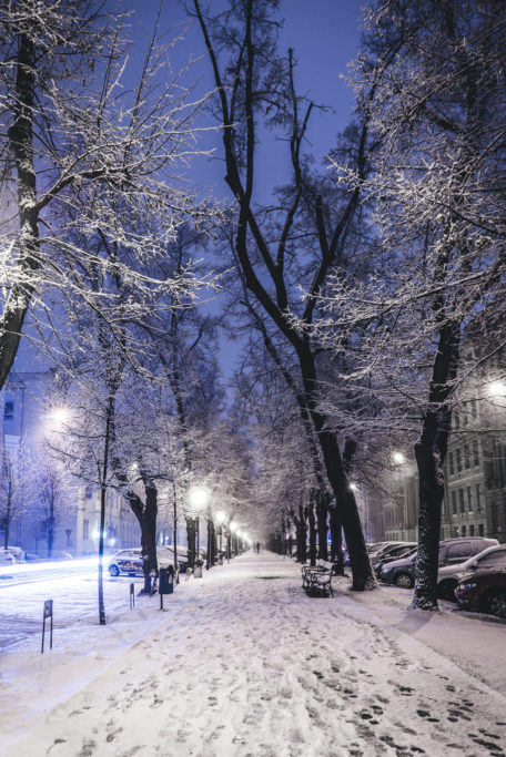 Verschneite Alleen sind ein schönes Wintermotiv.