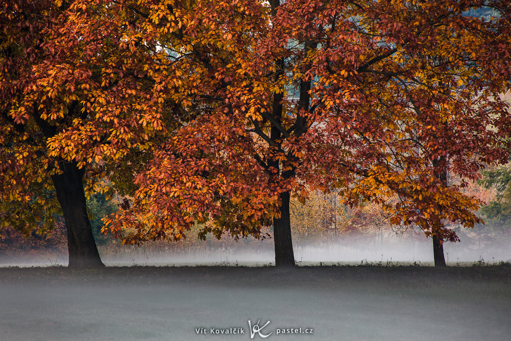 Wie man bei Nebel fotografiert: Drei Bäume über der Nebellinie.