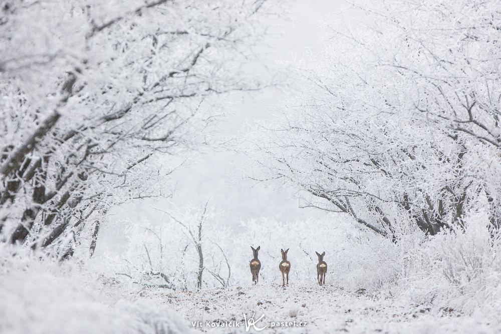 Landschaftsaufnahmen mit dem Teleobjektiv: an einem kalten Tag in der Woche verscheucht niemand Wildtiere.