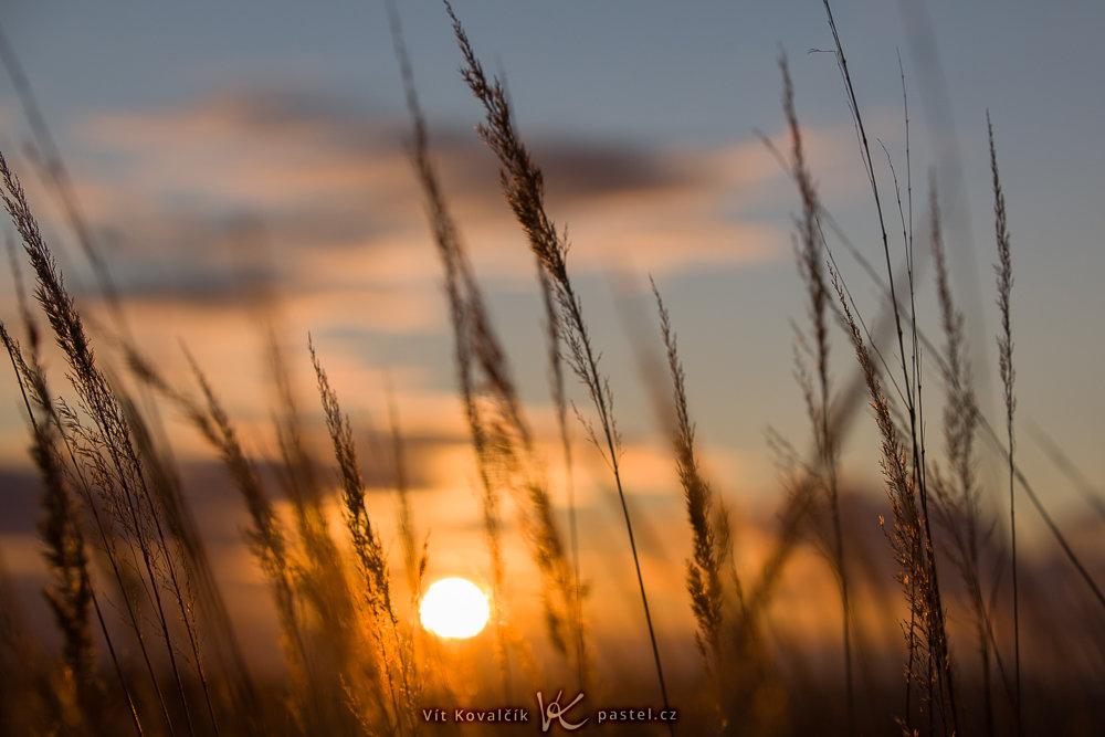 Aufnahmen bei Gegenlicht: Detailaufnahme des Grases mit der Sonne im Hintergrund.