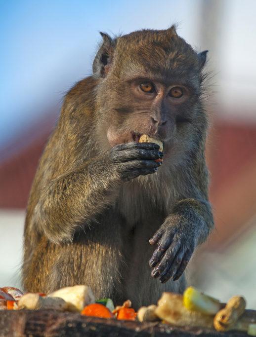 Tiere im Zoo fotografieren: der Pavian.
