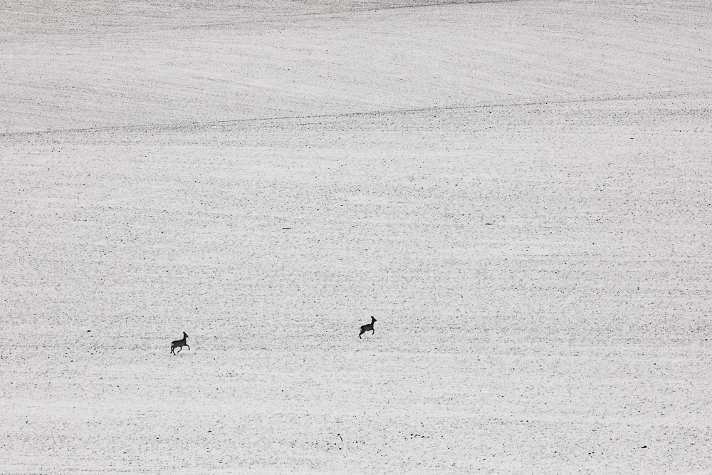 Zeit für ein Upgrade der Fotoausrüstung: Wildtiere auf einem verschneiten Feldern.