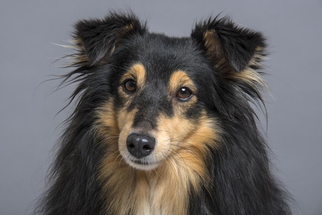 Hunde fotografieren: Bei diesem Porträt habe ich weiches Licht benötigt.