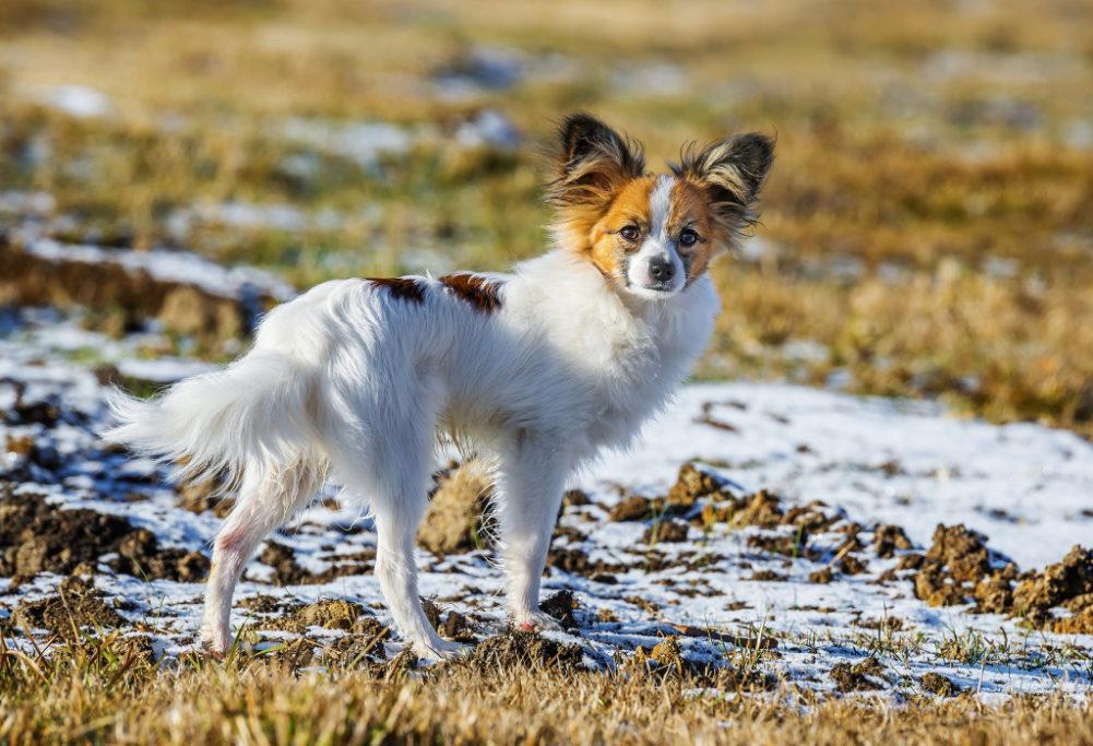 Hunde fotografieren: Der Hund sticht hierdurch hervor, während der Hintergrund leicht verschwommen ist und seine Farben mit dem Tier harmonieren.