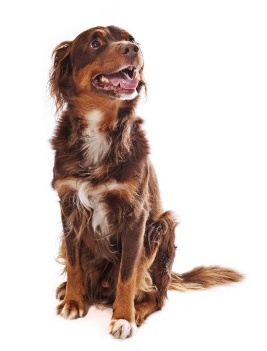 Hunde fotografieren: Der Hund hat einen lebendigen Ausdruck, blickt auf sein Herrchen und freut sich auf seine Belohnung.