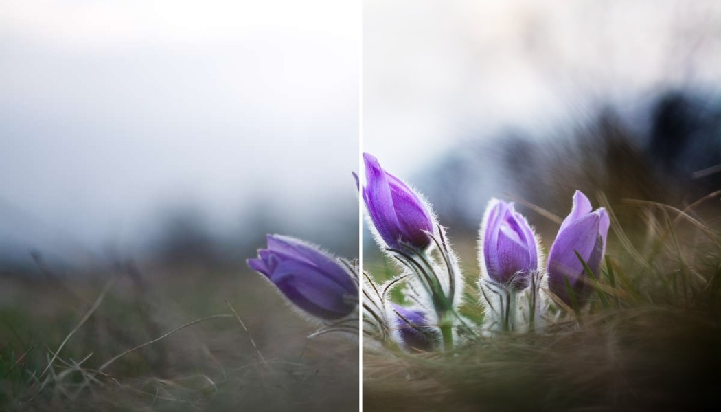 3 einfache Bearbeitungen für lebendigere Blumenfotos