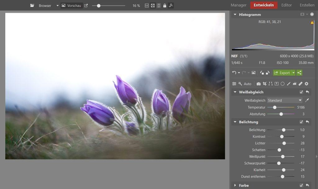 3 Bearbeitungen für lebendigere Blumenfotos: Ich habe das Foto mithilfe der Schieberegler Belichtung, Lichter und dem Weißpunkt etwas aufgehellt.