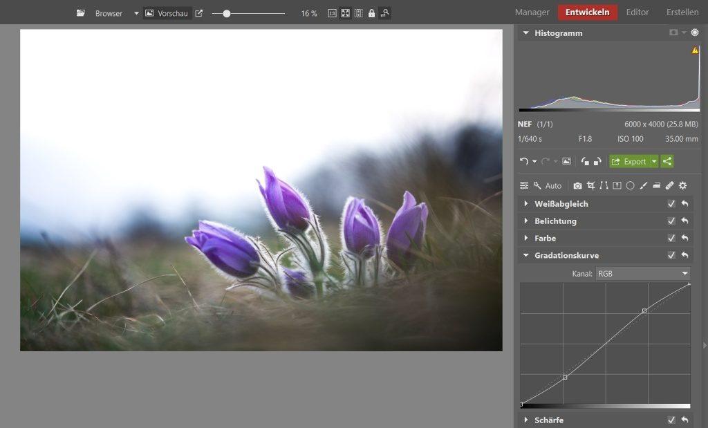3 Bearbeitungen für lebendigere Blumenfotos: Mithilfe der Gradationskurve habe ich die Aufnahme noch mehr aufgehellt und den Kontrast erhöht.