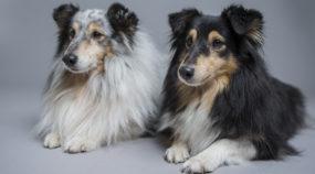 Hunde fotografieren - tolle Hundeporträts daheim und im Freien erstellen