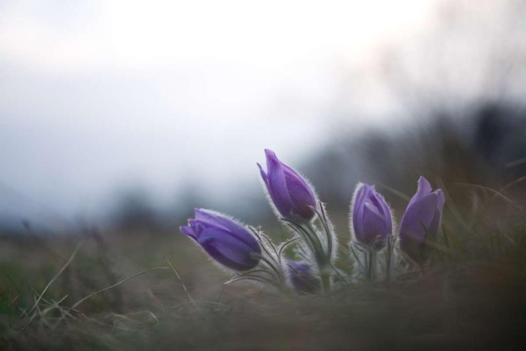 3 Bearbeitungen für lebendigere Blumenfotos: originalfoto.