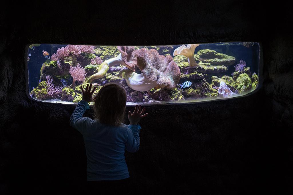 Kinder bei Gegenlicht fotografieren - das Aquarium
