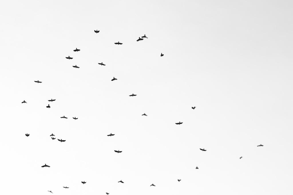 7 Tipps, wie Sie Schwarz-Weiß-Bilder verbessern können - Minimalismus