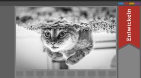 [Infografik] Farbfotos in Schwarz-Weiß-Bilder umwandeln