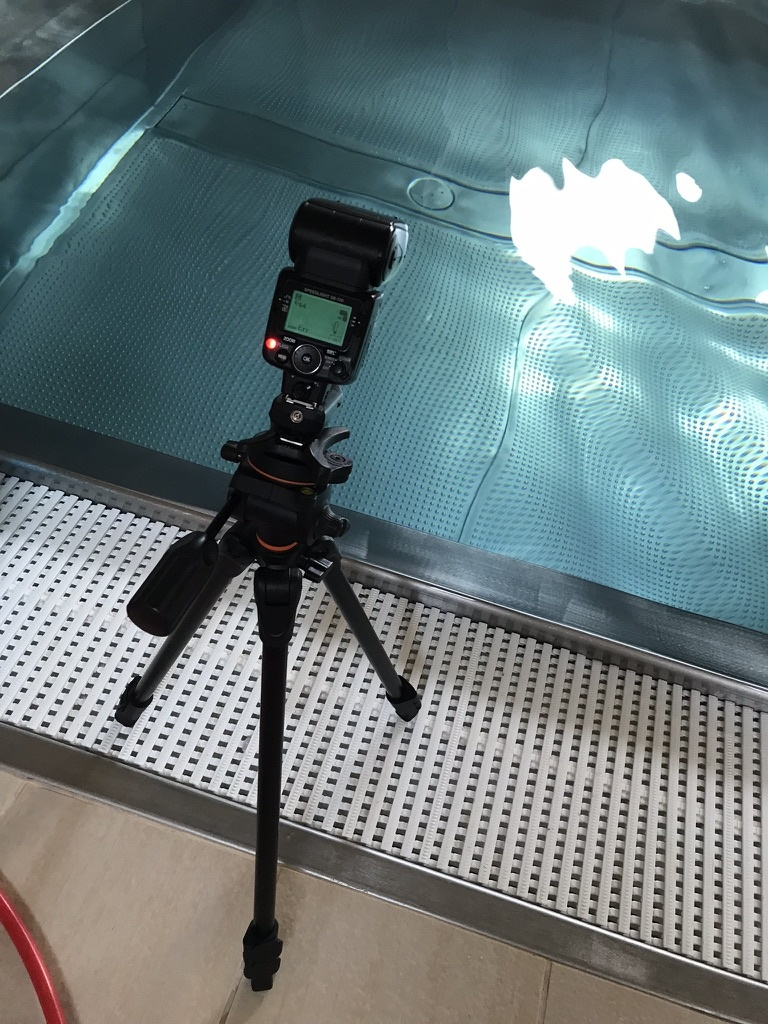 Wie fotografiert man unter Wasser - Blitz