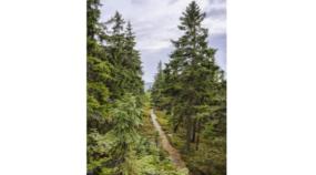 Landschaften anders fotografieren: Fotografieren Sie im Hochformat!