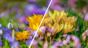 [Infografik] Wie ändert man die Farben auf einem Foto?