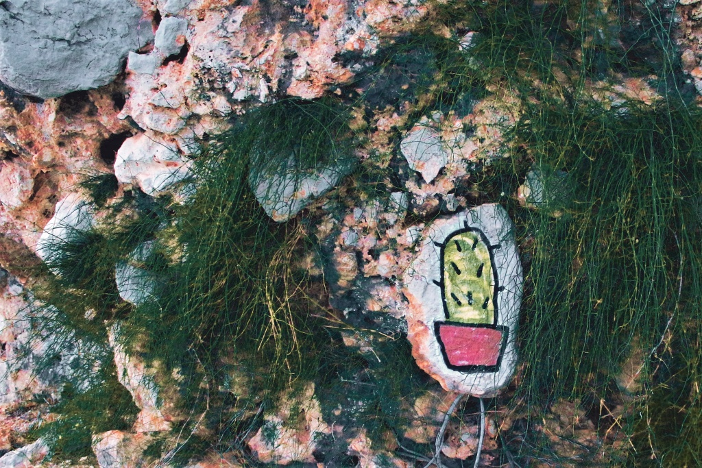 Wie fotografiert man im Urlaub - kaktus auf stein