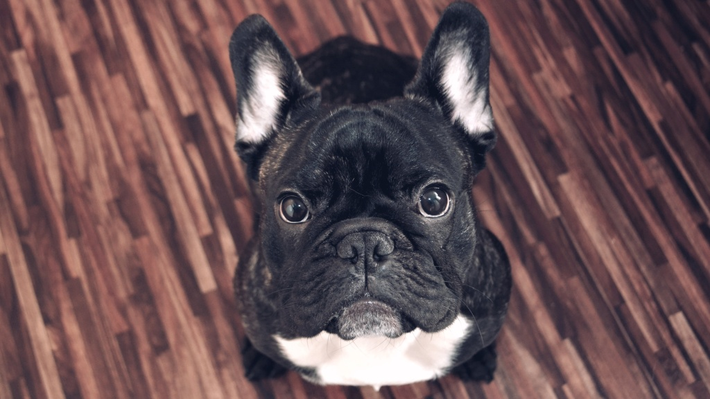 Wie man Hunde fotografiert - Ralf