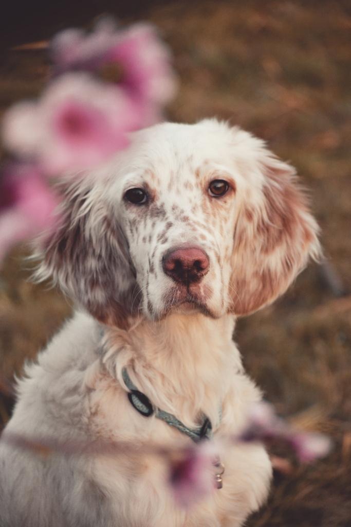 Wie man Hunde fotografiert - Vilik