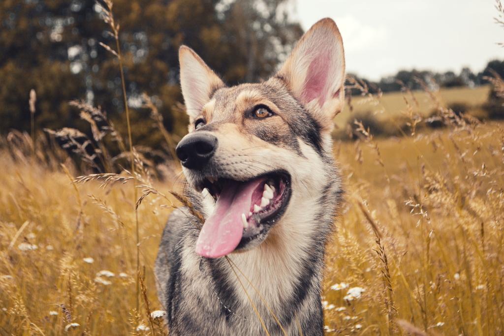 Wie man Hunde fotografiert - Arista weitwinkel