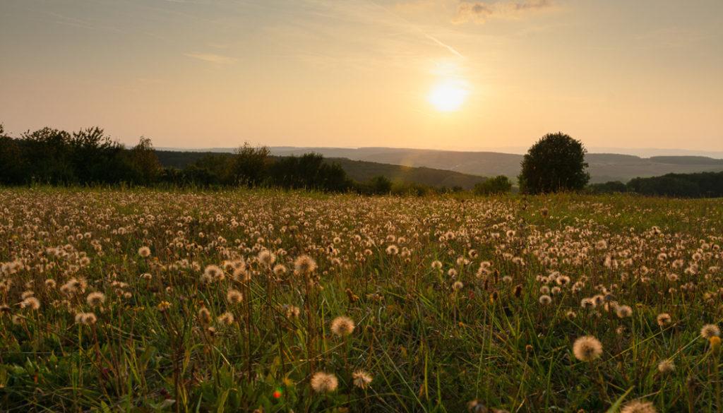 Wie sich das Licht in der Landschaft im Laufe des Tages verändert