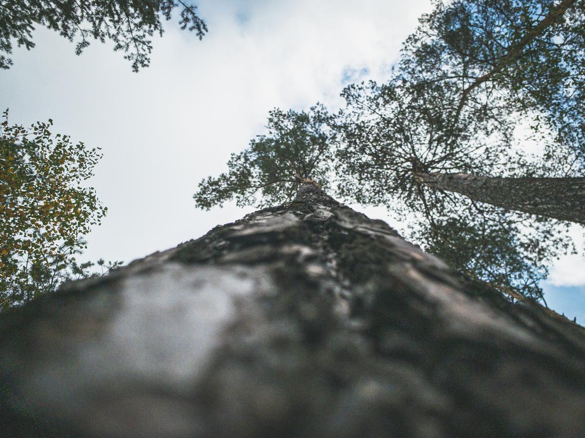 Von Grund auf! Probieren Sie, aus der Ameisenperspektive zu fotografieren