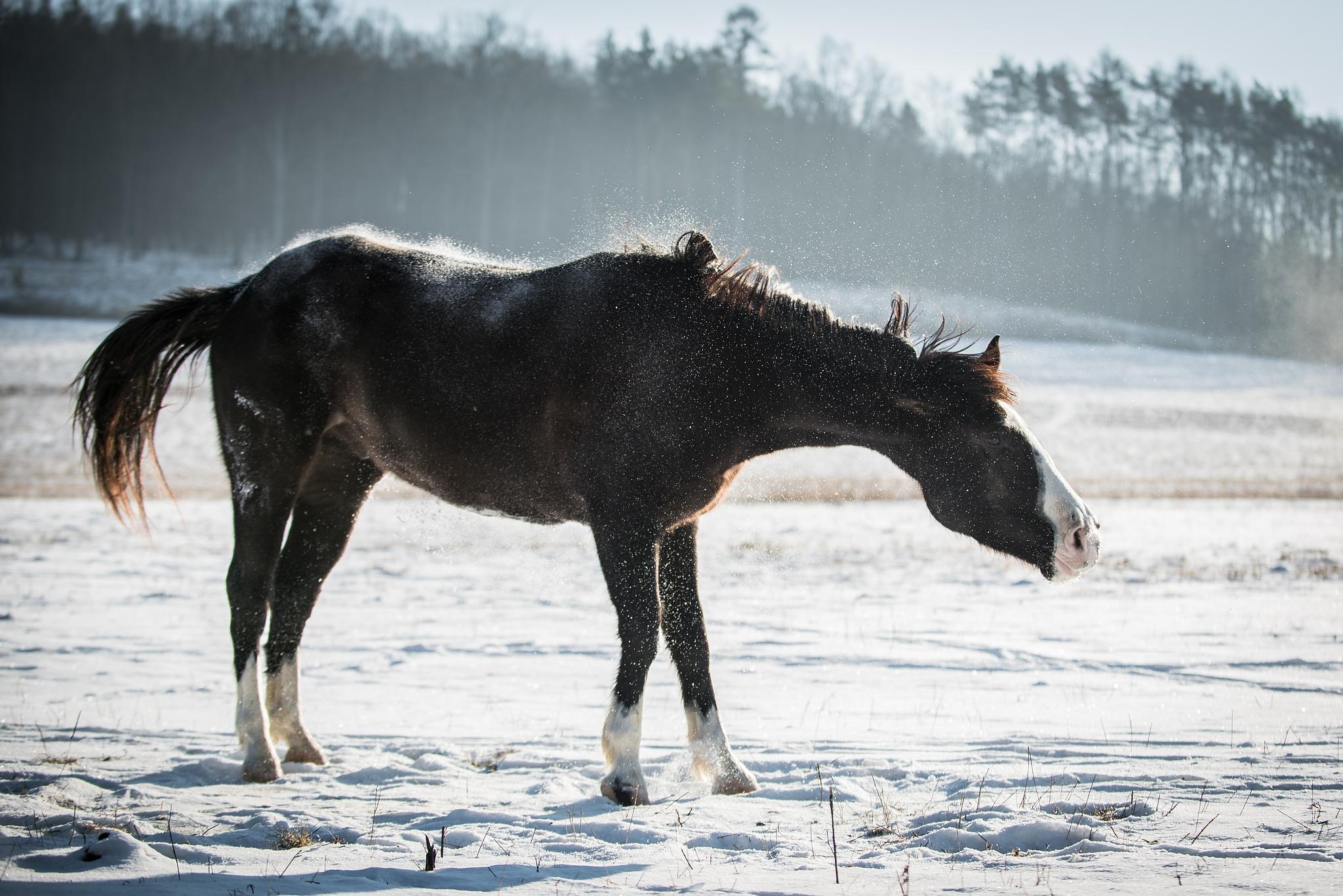 Wie fotografiert man Pferde? Baden, Ohren nach vorne und auf die Komposition achten