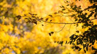 Fotografieren in der Natur: Was ist zu beachten?