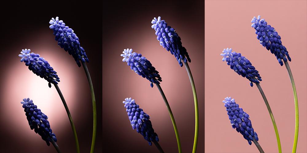 Wie fotografiert man Blumen zu Hause