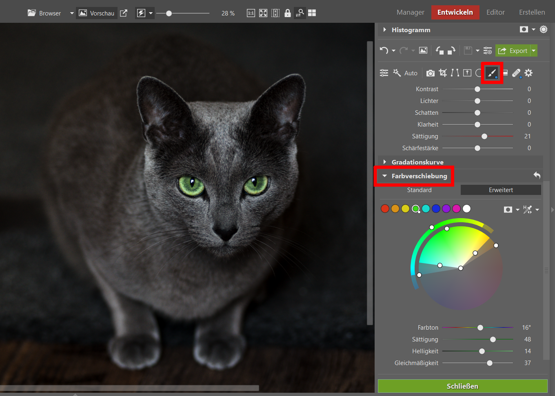 Tipps zum Bearbeiten von Fotos Ihrer Katzenlieblinge
